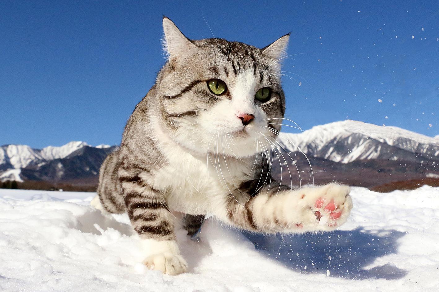 旅猫 ニャン吉